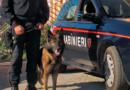 Bari. Incappa in un posto di controllo dei Carabinieri. Arrestato 28enne di Scorrano (LE), trovato con oltre mezzo chilo di cocaina occultata nella portiera dell'auto.